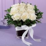trandafiri albi 2