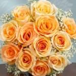 trandafiri oranj