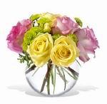 trandafiri pastelati