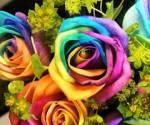 Trandafirii curcubeu